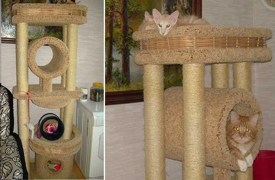 Нижний этаж кошачьего дома обычно игнорируется