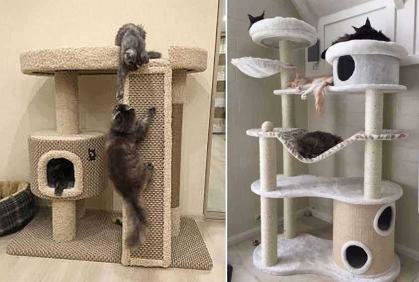 Лазалки и гамаки — это обычно нравится кошкам