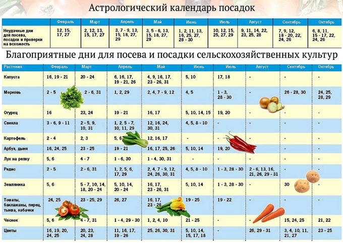 лунный календарь посева семян на рассаду 2019г