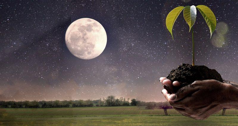 Посев рассады по лунному календарю 2019 год