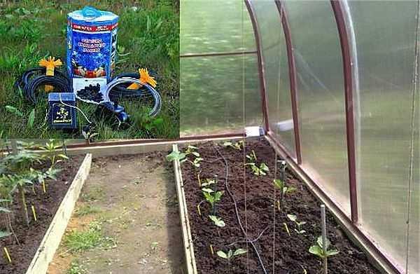 Набор для капельного полива АкваДуся идеален для использования в небольших теплицах, работает и с грядками на открытом гурнте