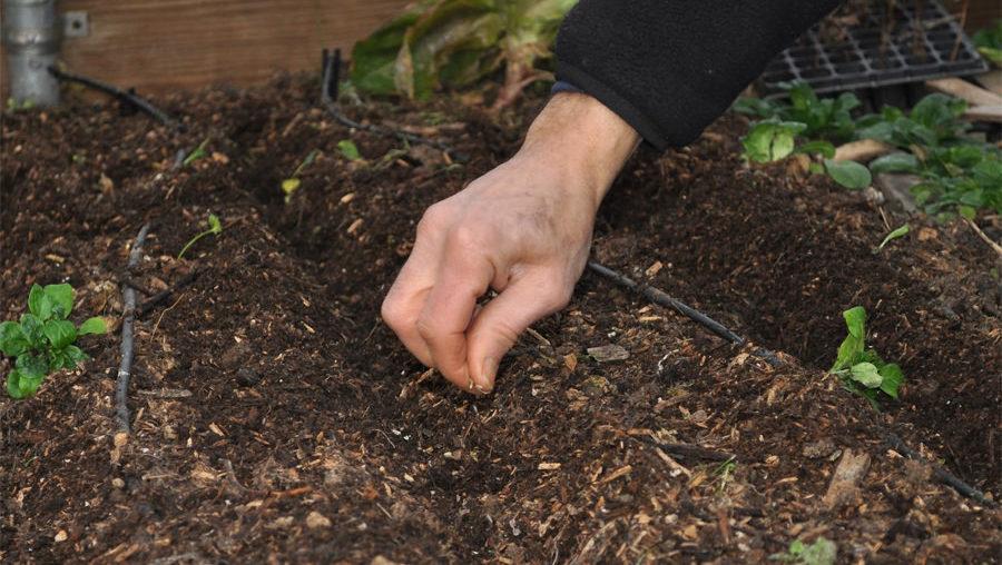Работы в саду в апреле. Посев семян в открытый грунт в апреле.