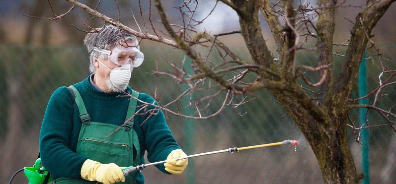 Весенняя обработка плодовых деревьев