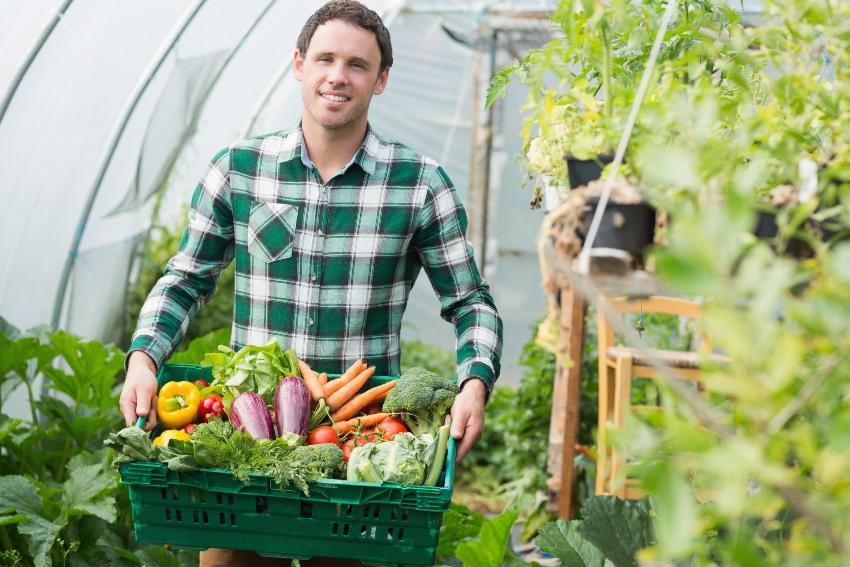 Теплица из агроволокна, позволяет увеличить урожайность