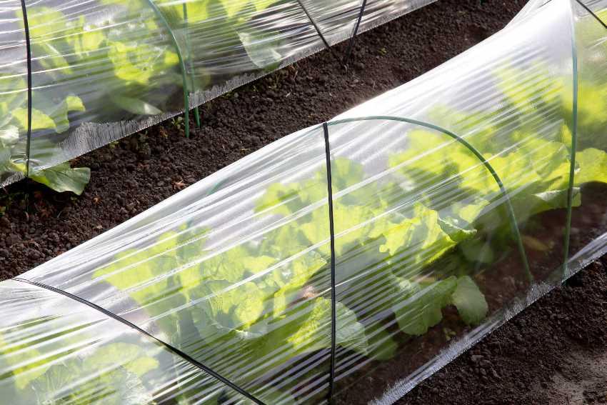 Плотность укрывного материала зависит от высоты конструкции и самих растений