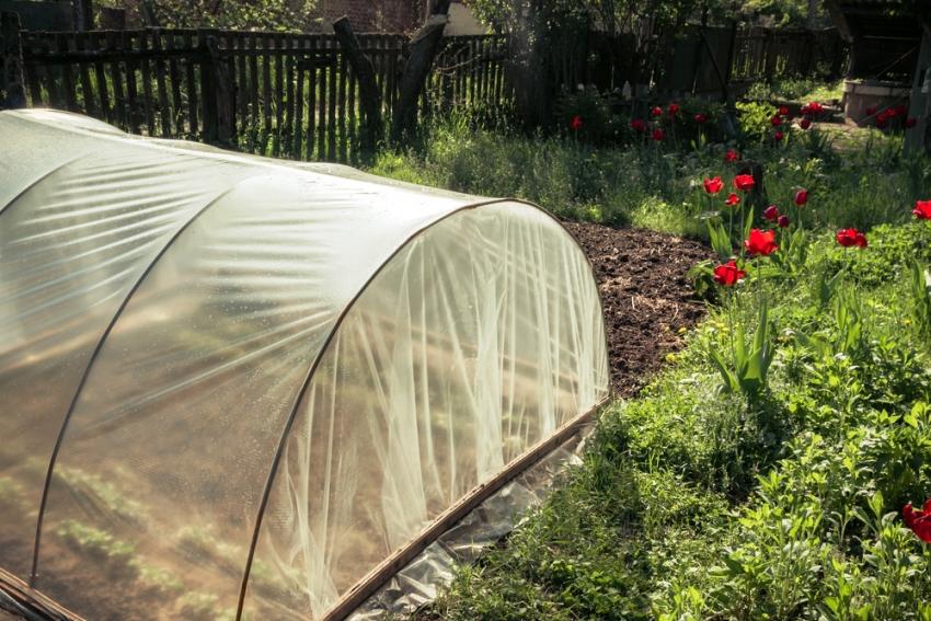 Укрывной материал Агротекс хорошо сохраняет тепло и пропускает до 90% солнечного света