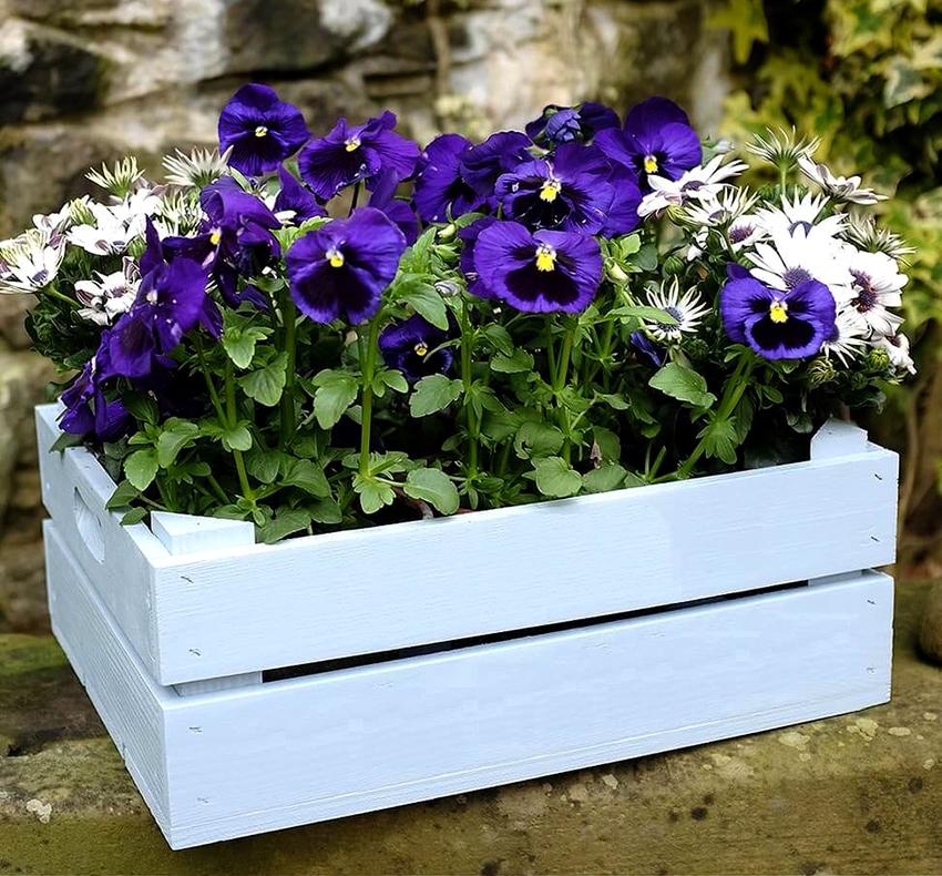 Обычный деревянный ящик легко превратить в красивый цветочный горшок