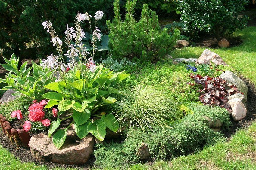 Обычная клумба с камнями и несколькими видами растений